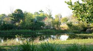 Beautiful View of Nature